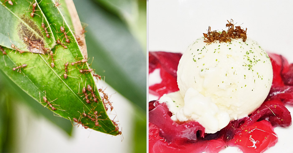 Red weaver ants on the leaves, and on the ice cream.