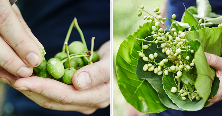 Left: Unripe local figs. Right: Curry berries.
