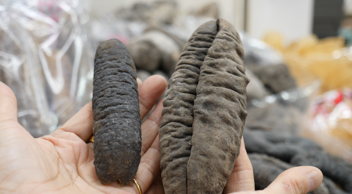 Bald sea cucumbers (left) look different from spiny sea cucumbers (right).